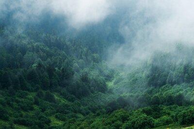 Fototapeta Туманный лес на склоне горы