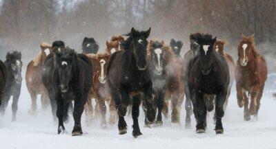 Fototapeta 雪原 を 走 る 馬