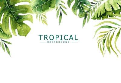 Fototapeta Egzotyczne liści palmowych, drzewa dżungli, brazil tropic borany elementów. Doskonały do projektowania tkanin.