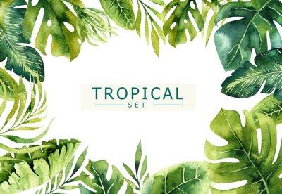Fototapeta R? Cznie rysowane akwarelowy tropikalnych ro? Lin tle. Egzotyczne liści palmowych, drzewa dżungli, brazil tropic borany elementów. Doskonały do projektowania tkanin. Aloha sztuka.