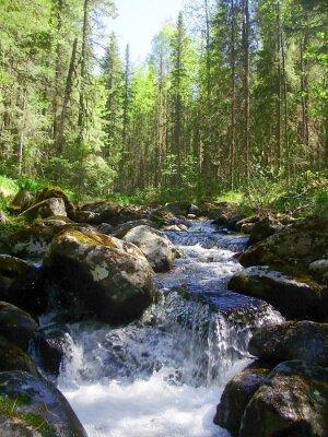 Fototapeta Rzeka górskich w lesie iglastym, Горная река в хвойном лесу