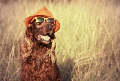 Fototapeta Zabawna pies