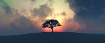 Fototapeta zachód słońca i drzewa