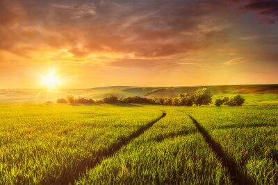 Fototapeta Zachód słońca w dziedzinie