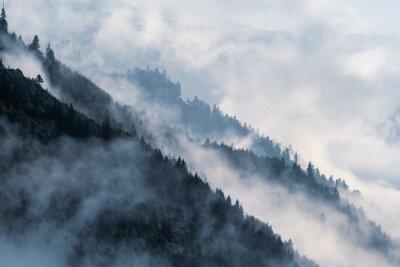 Fototapeta Zalesione górskie zbocza w nisko położonej mgle doliny z sylwetkami zimozielonych drzew iglastych spowitych mgłą.