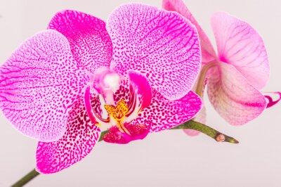 Fototapeta Zamknij się kwiat orchidei