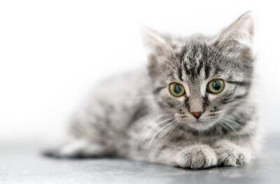 Fototapeta Zbliżenie Mały kotek