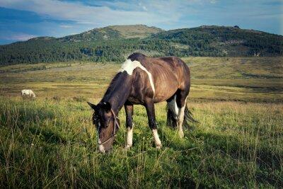 Fototapeta zbliżenie z konia wypasu w łąki, w tle góry i błękitne niebo