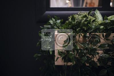 Fototapeta Zbliżenie Zielone Kwiaty Czarne Tło Drewniane Doniczki Okno
