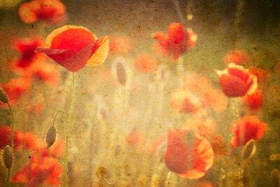 Fototapeta Zdjęcie z kwiatów maku