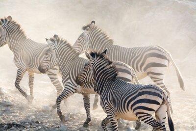 Fototapeta Zebry z systemem, Namibia, Afryka