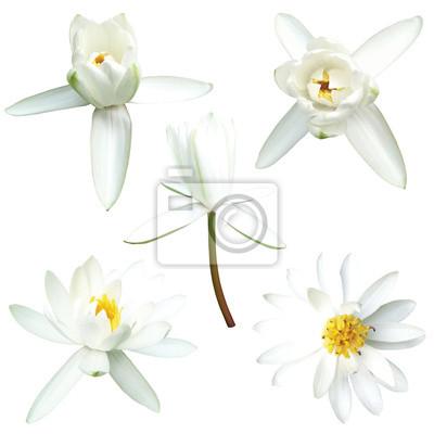 Fototapeta zestaw białego lotosu na białym tle