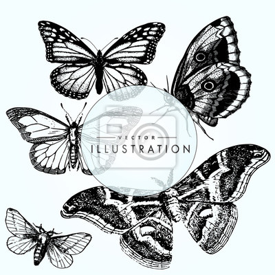 Zestaw Szkic Tatuaż Motyl Fototapeta Fototapety Motyli