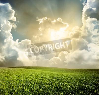 Fototapeta Zielona łąka pod błękitne niebo z chmurami