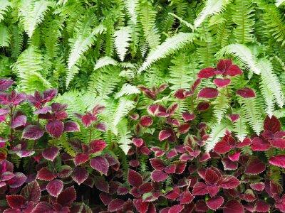 Fototapeta Zielona paproć i czerwona mała roślina na pionowym ogrodzie.