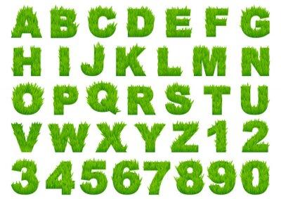 Fototapeta Zielona trawa alfabetu z liter i cyfr