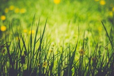 Fototapeta Zielona trawa Lawn Retro
