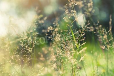 Fototapeta Zielona trawa na polu z promieni słonecznych. Niewyraźne tło lato, selektywne focus.