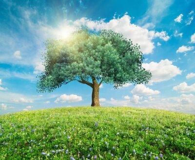 Fototapeta Zielone drzewo krajobraz wiosna