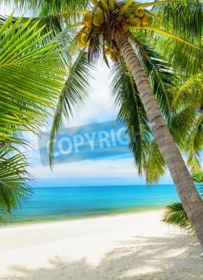 Fototapeta Zielone drzewo na białym piasku plaży