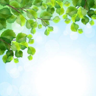 Fototapeta Zielone liście tło wektor gałęzi drzewa