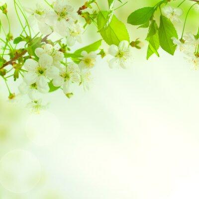 Fototapeta Zielone liście, w tle pięknej przyrody