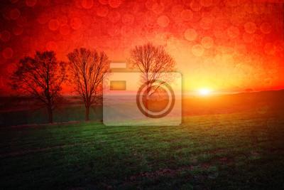 Drzewa o zachodzie słońca