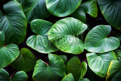 Fototapeta zielone rośliny