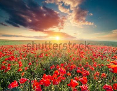Fototapeta zielony i czerwony piękny kwiat pole maku