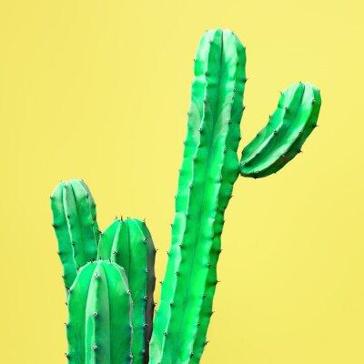 Fototapeta Zielony Kaktus Zestaw. Projektowanie mody w Galerii Sztuki. Minimalna Stillife. Koncepcja na żółtym tle