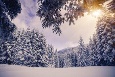 Fototapeta zima