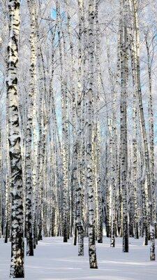 Fototapeta Zima brzozowej