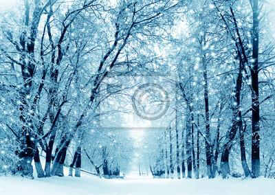 Zimowa ścieżka w lesie