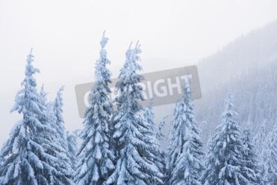 Fototapeta Zimowy krajobraz z fir w śniegu. Mgła w górach