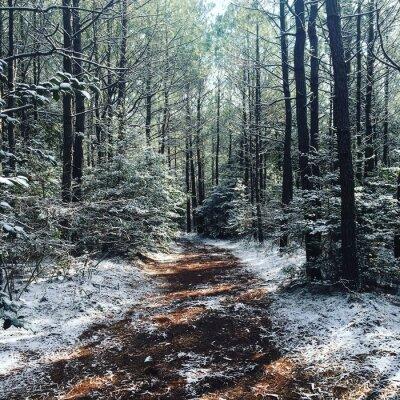 Fototapeta zimowym lesie