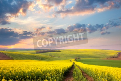 Fototapeta Żółte pola kwitnienia, Droga ziemia i piękne doliny, przyroda krajobraz wiosna