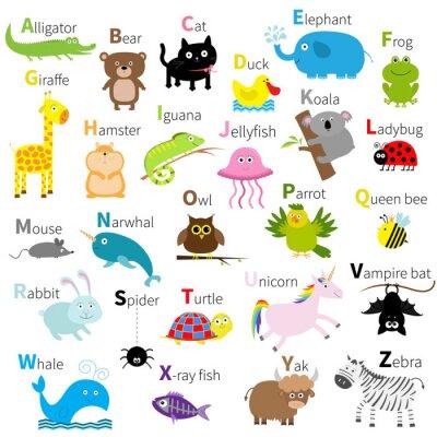 Fototapeta Zoo zwierząt alfabetu. zestaw cute kreskówki. Odosobniony. Biały design. Dziecko dzieci edukacja. Aligator, niedźwiedź, kot, kaczka, słoń, żaba, żyrafa, chomik, iguana, meduzy, koala Płaska konstrukcj