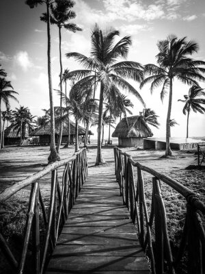 Fototapeta Życie wyspy