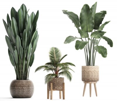 Naklejka 3d illustration of tropical plants banana
