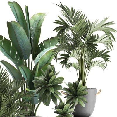 Naklejka 3d illustration of tropical plants on white background