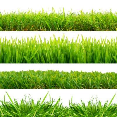 Naklejka 4 Wiesen Gras Freisteller