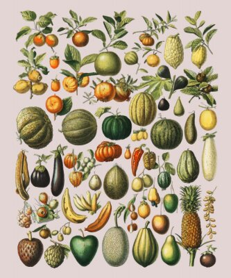 Naklejka A vintage illustration of a wide variety of fruits and vegetables from the book, Nouveau Larousse Illustre (1898), by Larousse, Pierre, Augé and Claude, Digitally enhanced by rawpixel.