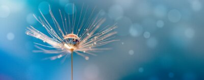 Naklejka Abstract blurred nature background dandelion seeds parachute. Abstract nature bokeh pattern