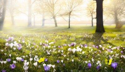 Naklejka abstrakcyjne tło wiosna piękny słoneczny