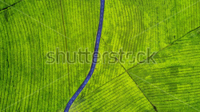 Naklejka Aerial view of empty highway on the tea plantation. Shot at Subang highlands, Indonesia