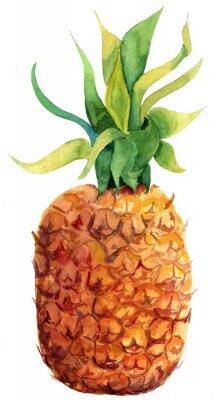 Naklejka Akwarela ananas na białym tle