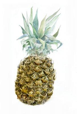 Naklejka Akwarela ananasów wyizolowanych na białym tle