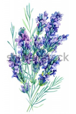 Naklejka akwarela bukiet kwiatów lawendy ilustracja na na białym tle