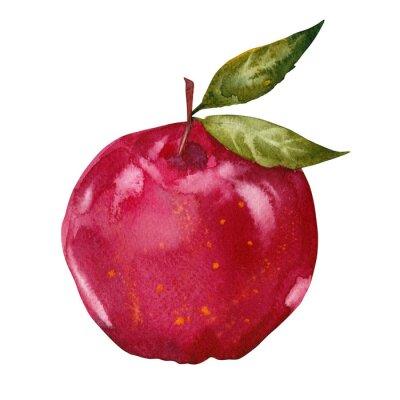 Naklejka akwarela czerwone jabłko