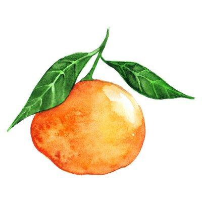 Naklejka Akwarela dojrzałe pomarańczowe owoce mandarynki cytrusowe odizolowane